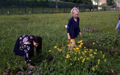 Projet du Parc de Chartreuse – Entrons dans le Moyen Age par le jardin Cartusien